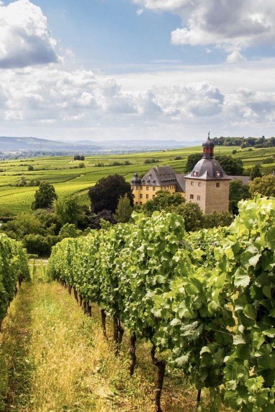 Лучшие винные регионы Германии